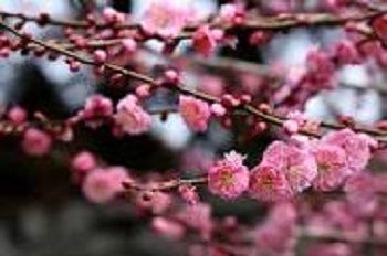 楽しい春の旅行を計画されてはいかがですか!