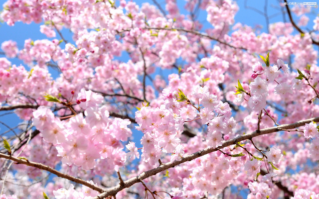 【4月のおすすめ特選プラン】