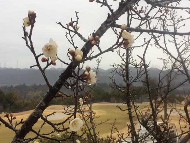 梅の蕾に春を想う・・・