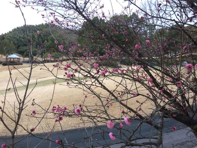 一足早い春を感じて① 〜早咲きの梅〜