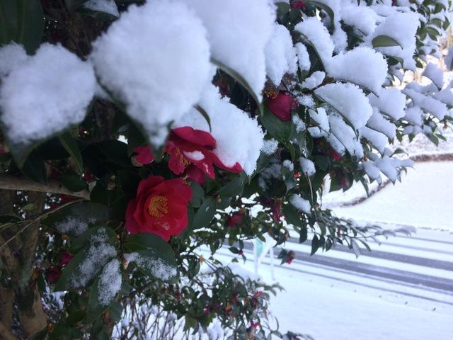 今年最後の大雪!?