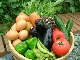 ジャガイモの植え付け準備