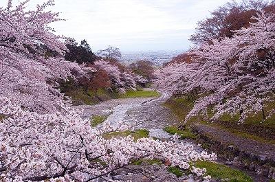 春の自然旅 『養老公園』