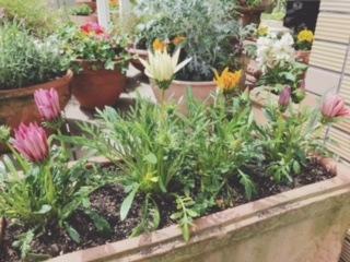 不思議なお花を植えました!