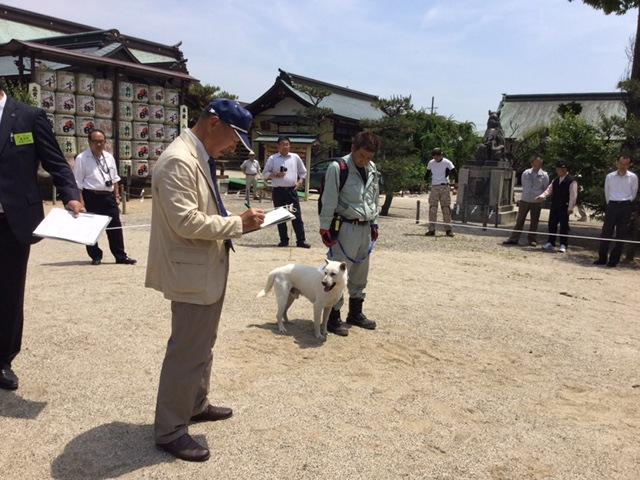 紀州犬 ピコ&チャッピー