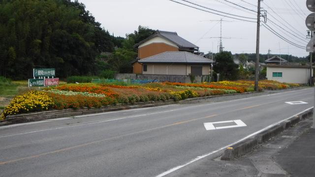 県道花壇!