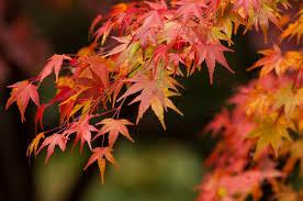 すっかり秋の装い♪