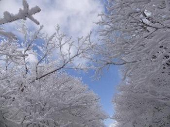 寒さの中に光美しい光景