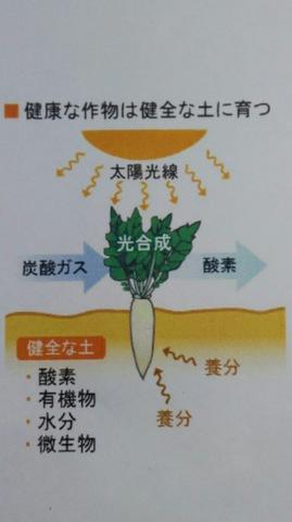 野菜栽培について 〜土作り編①〜