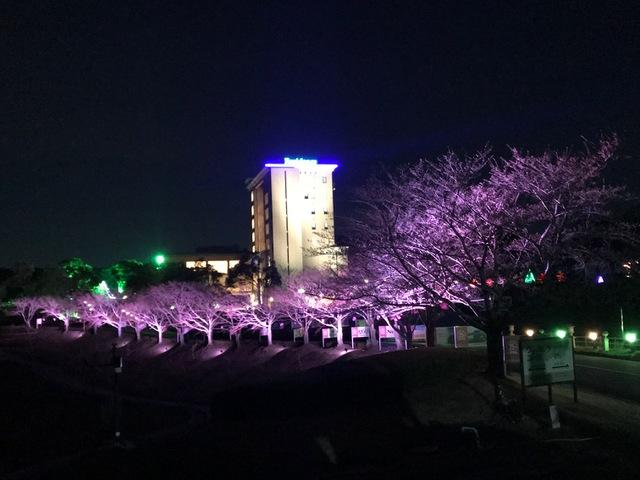 東建多度の桜開花
