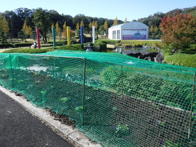 一年草花壇の獣被害対策
