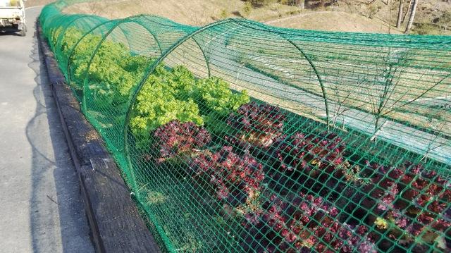 野菜・植物たちの冬期間の水管理について!