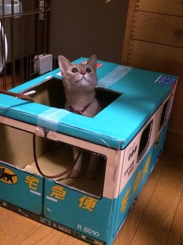 猫の日です=^.^=
