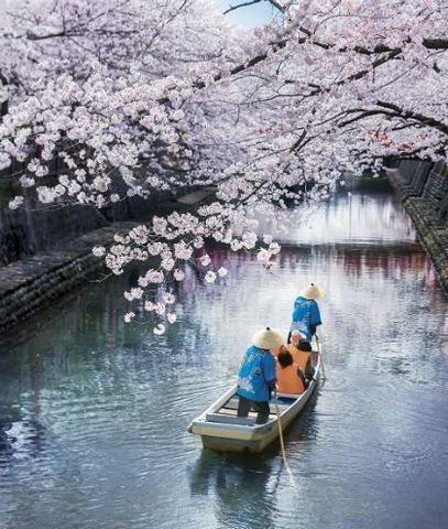 桜の木の下、優雅に舟下り♪