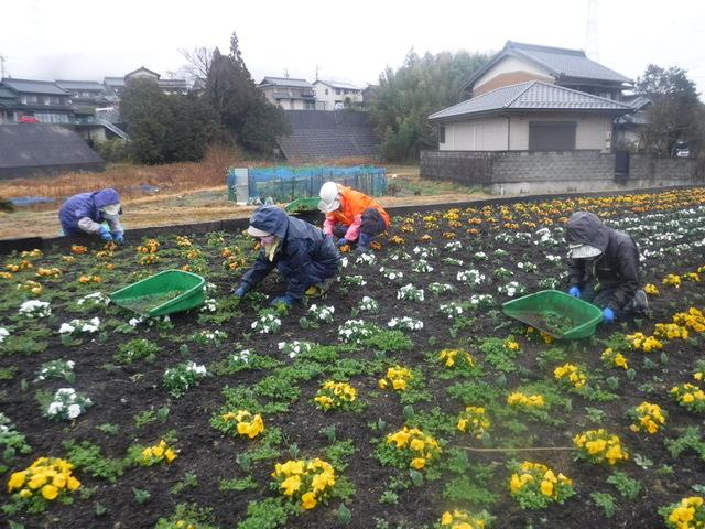 除草作業の開始