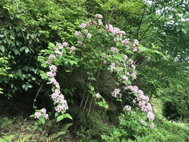 山野草の美 〜谷空木〜