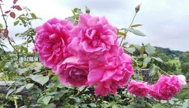 再び、綺麗な花が咲きました♪