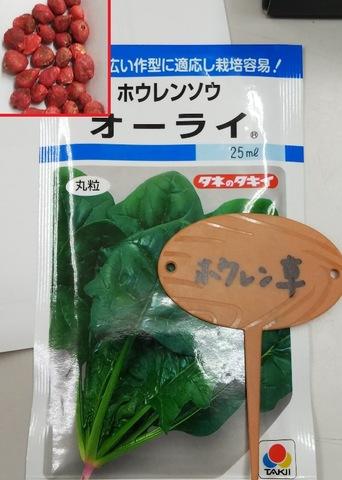 ホウレンソウの栽培方法♪