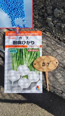 カブの栽培方法♪