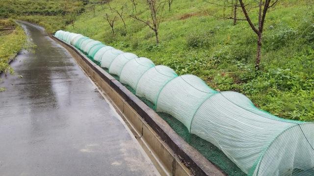秋〜冬野菜の植え付け・種蒔き 作業完了♪⑥