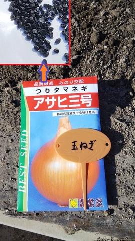 タマネギの栽培方法♪