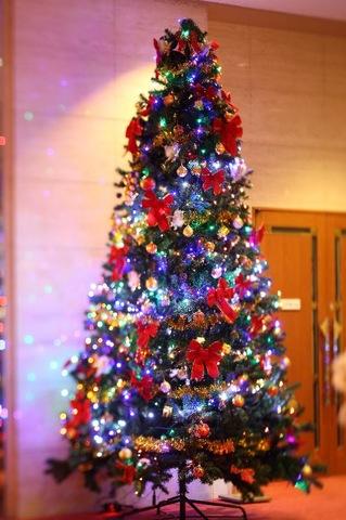 クリスマスの予定はお決まりですか?