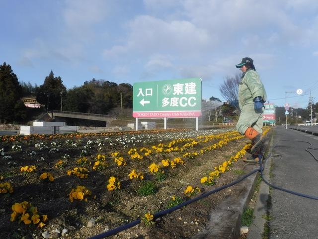 一年草花壇への液肥散布