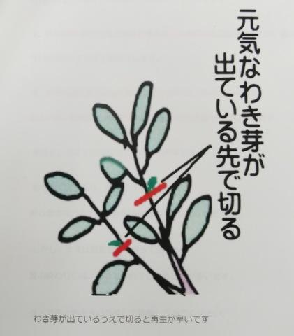 野菜栽培の豆知識♪ 〜ナスの更新剪定作業編〜