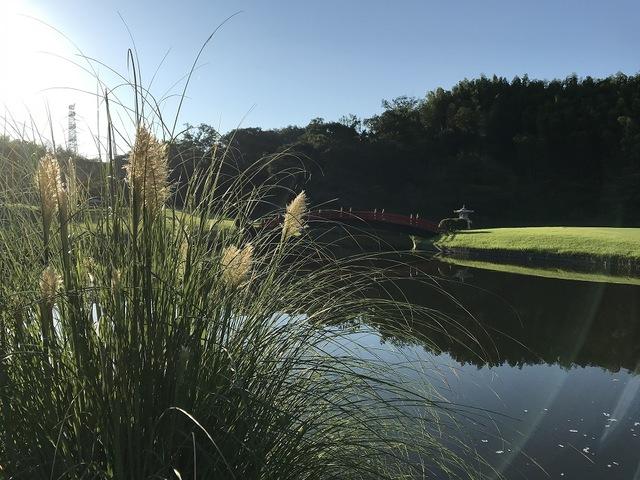 秋の気配 〜パンパスグラスの出穂〜