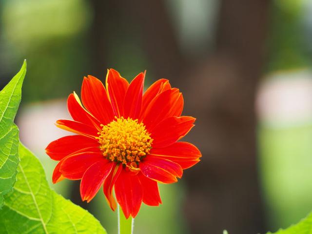 10月21日の誕生花