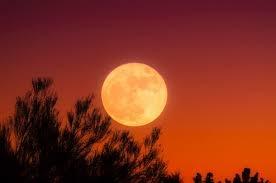中秋の名月を眺めて
