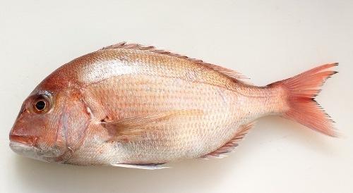 鯛の蕪良蒸し