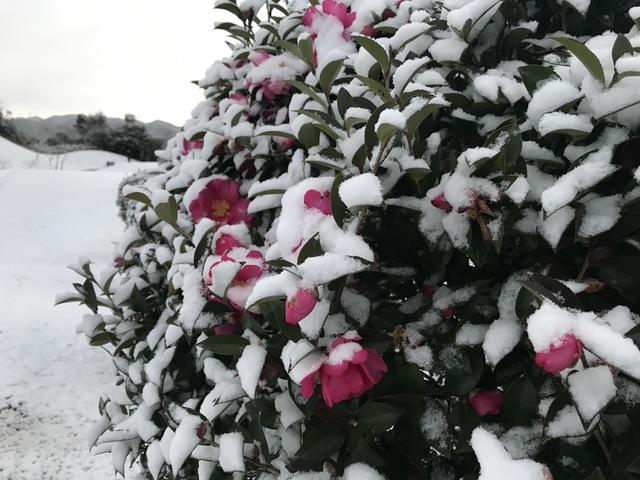 大晦日の降雪