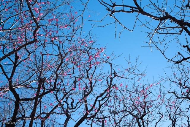 暦の上では春になります