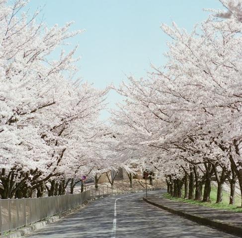 桜咲く春来たり。楽しいお出かけ、しませんか。