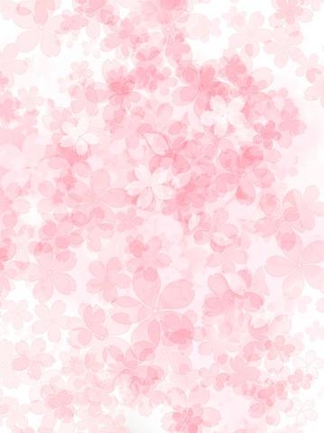 さくらの開花*。