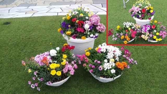 大会を彩る、鉢物の花々♪ ①