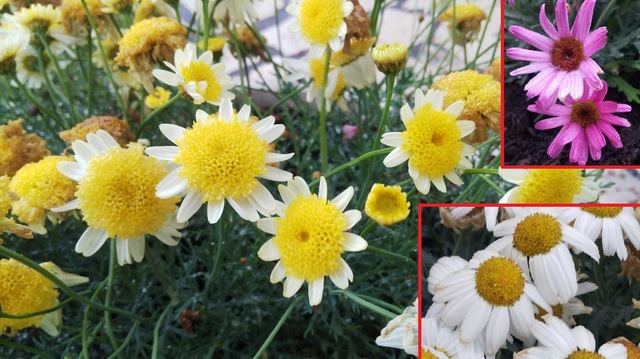 大会を彩る 鉢物の花々♪ ②