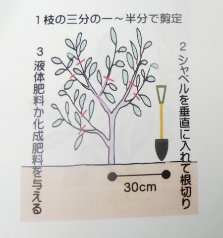 野菜の豆知識♪ 〜ナスの更新剪定作業編〜