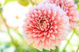 9月10日の誕生花