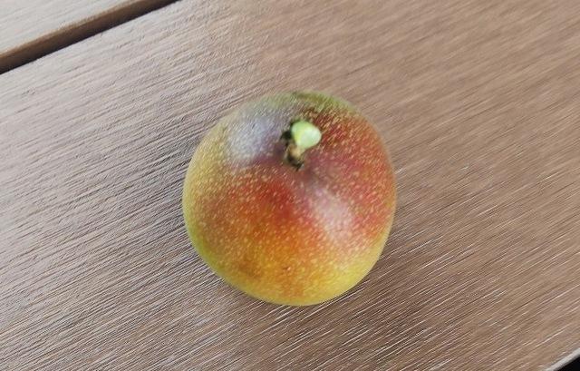 パッションフルーツの実が…。