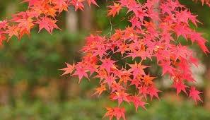 10月3日の誕生花