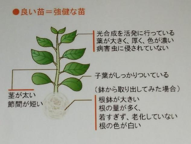 野菜栽培の豆知識♪ 〜苗の栽培編①〜